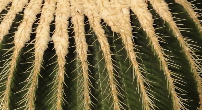 Neue Wege in der Öffentlichkeitsarbeit – Ein offener Brief an alle Kaktusclubs