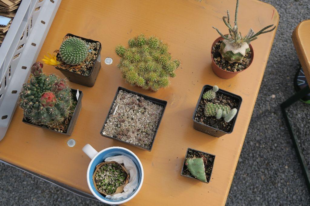 Schaupflanzen: Sämlinge in verschiedenen Stadien, ausgetriebene Hackschnitzel, blühende Kakteen und skurrile Formen.