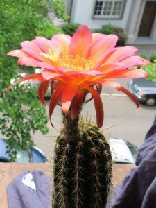 Kaktuspflege